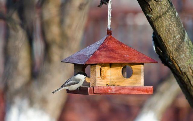 Простая и надежная кормушка для птиц