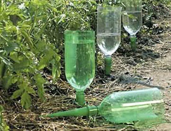 Альтернатива - автономный капельный полив из пластиковых бутылок