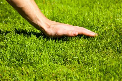 как ухаживать за газонной растительностью